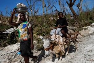 Protecting animals in Haiti after Hurricane Matthew - World Animal Protection