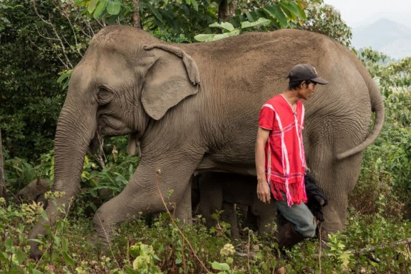 Elephants and mahouts - World Animal Protection - Wildlife. Not entertainers