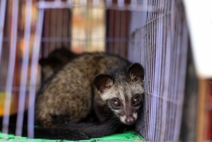 Music icons Jann Arden and Buffy Sainte-Marie join World Animal Protection in calling for an end to the global wildlife trade