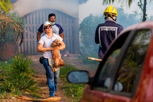 Dog being evacuated from a home in the Amazon rainforest close to a fire - World Animal Protection - Animals in disasters