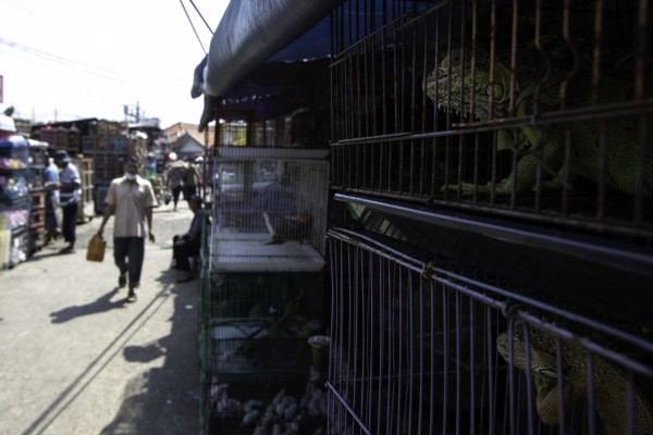 A wildlife market in Indonesia