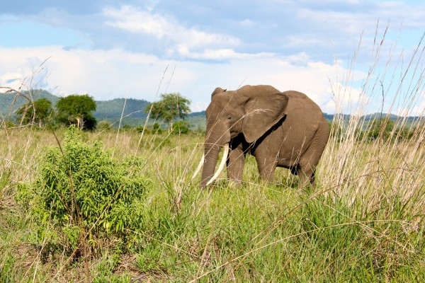 World Animal Protection partner Intrepid Travel announces end to elephant rides