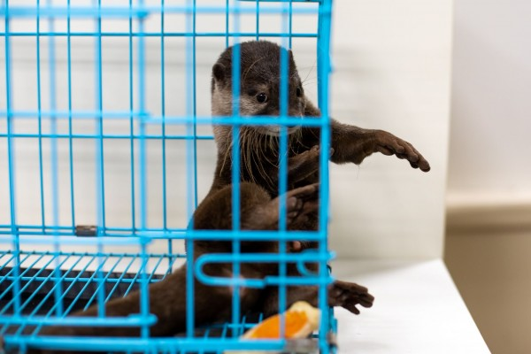 Why you shouldn't share that cute pet otter video