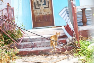 Cat in front of damaged house after Hurricane Irma | World Animal Protection