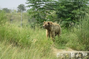 New expansion opens at Balkasar bear sanctuary