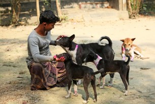 Man and his four recently vaccinated dogs in Bangladesh