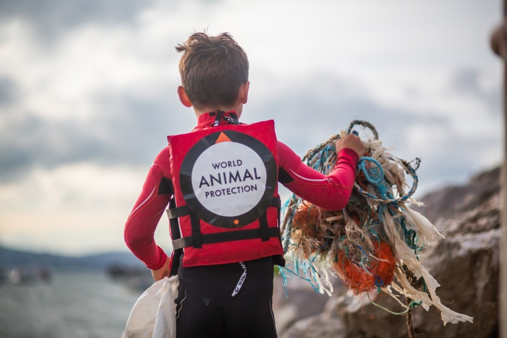 Ghost gear beach clean - World Animal Protection - Animals in the wild