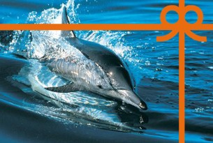 eCard: Help protect dolphins