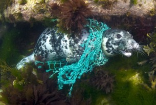 Thai Union joins fight to protect animals from killer 'ghost gear'