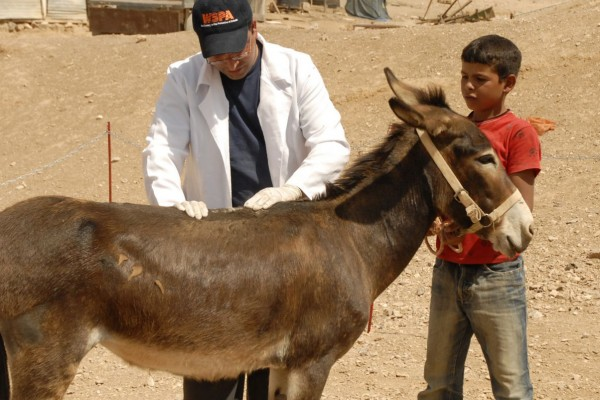 Palestine Wildlife Society (PWLS) run mobile clinics to treat working equines in Palestine.