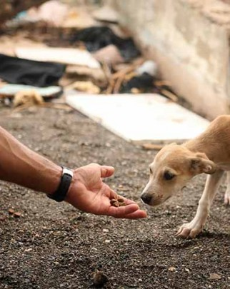 Hand reaching out to feed dog