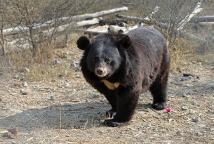 bear, Pakistan