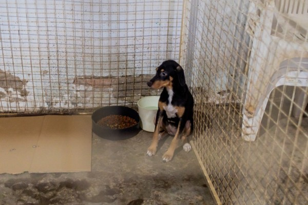 Small dog in a big cage next to a bowl of food - World Animal Protection