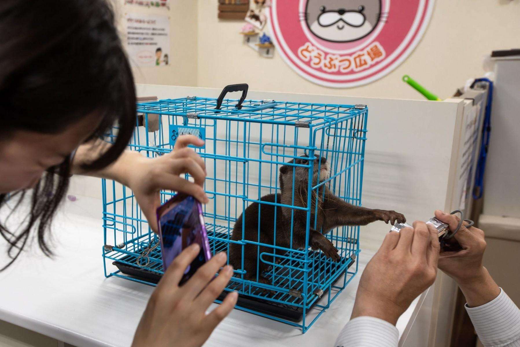 Otter, Japan