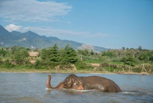 elephant, Laos