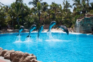 Dolphin show with five dolphins jumping over a rope