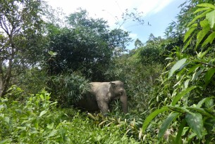 Jahn, a 32-year-old female elephant at Following Giants