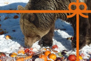 eCard: Feed a hungry bear for two weeks