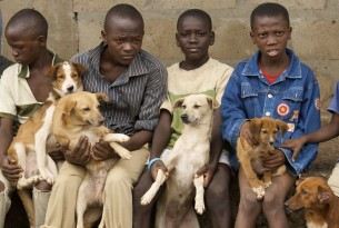 Dogs and their owners in Sierra Leone