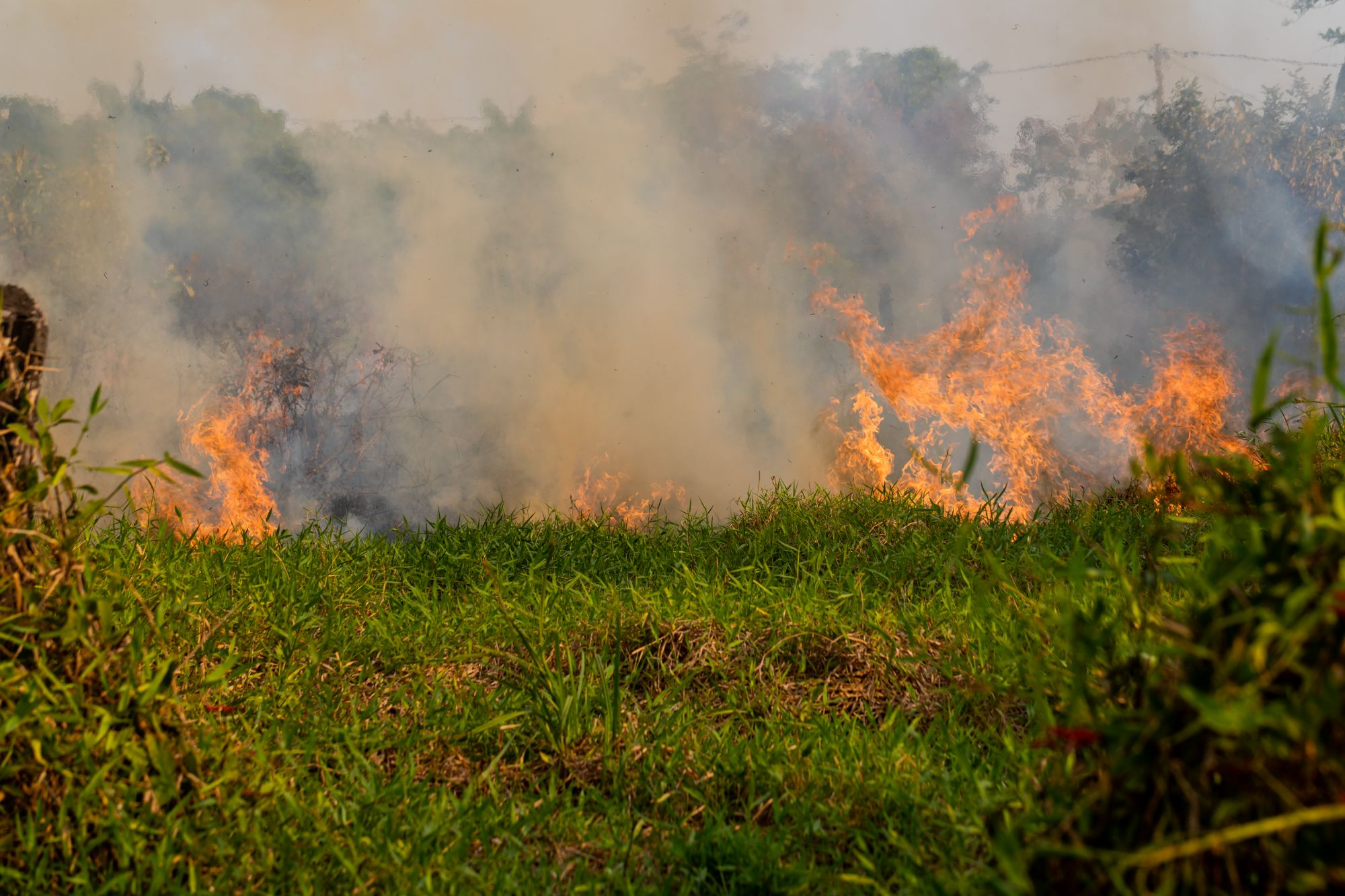 Brazil's Amazon rainforest in flames in 2019, burning at the highest rate since 2013. There have been 72,843 fires reported in Brazil since the beginning of the year. Credit Line: Noelly Castro/World Animal Protection