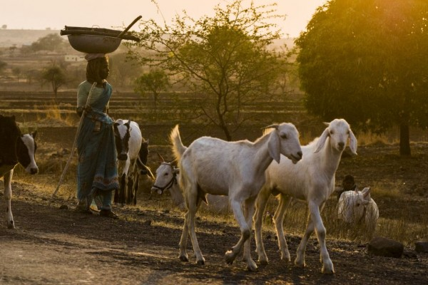 Farm animals walking at sunset with herders - Universal Declaration on Animal Welfare - World Animal Protection