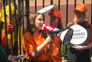 Protest calling on a ban of battery cages in front of Parliament House in Sydney, October 2019