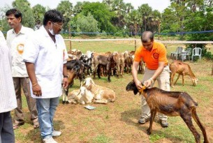 Animal welfare: for higher education