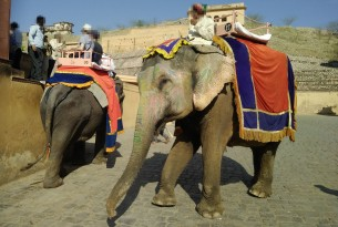 Elephant at Amer Fort, India - World Animal Protection - Wildlife. Not entertainers