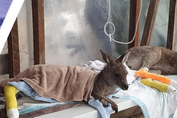 Aussie animals you have helped