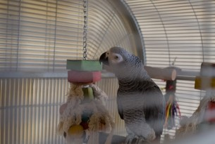 A day in the life of a pet parrot