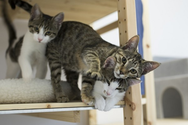 Pictured: Cats at a shelter we support