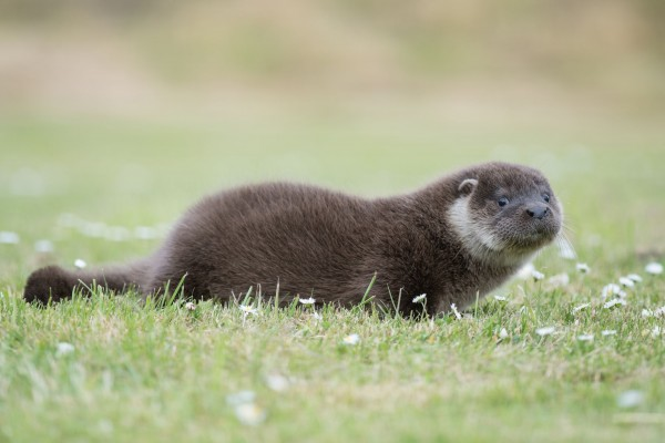 Saving Shetlands sealife...with your help!