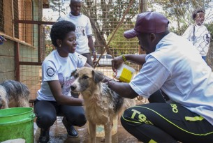 Young people cleaning a dog at KSPCA Kenya