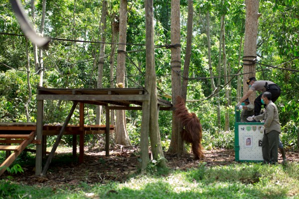 Badak Kecil Island Orangutan Sanctuary being built - World Animal Protection