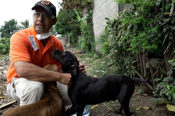 Volcán de Fuego update: meet the animals we're helping