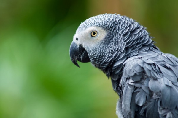 Turkish Airlines: it must act to stop parrot poaching