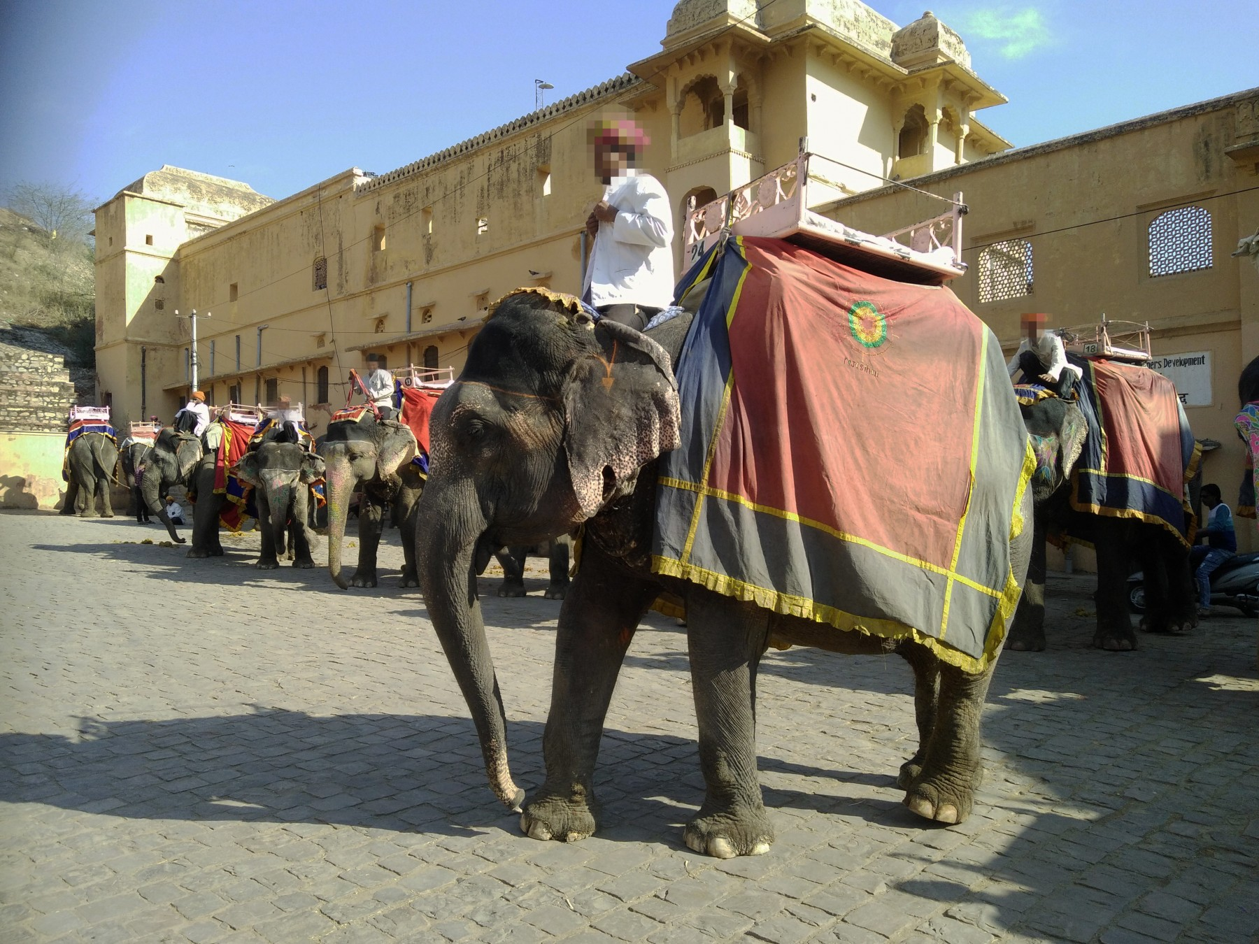 Elephants forced to give rides to tourists at Amer Fort in India.