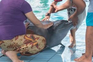Captive dolphin suffering