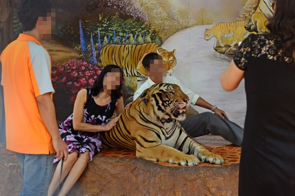Tourists posing next to a tiger at a tiger entertainment attraction
