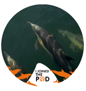 Join The Pod social media picture wild dolphins - World Animal Protection