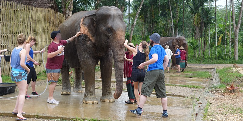 A group of tourists crowding around an elephant to wash it. Just behind them, you can see another group doing the same to another elephant.