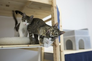Three rescue cats at a shelter in Constanta, Romania