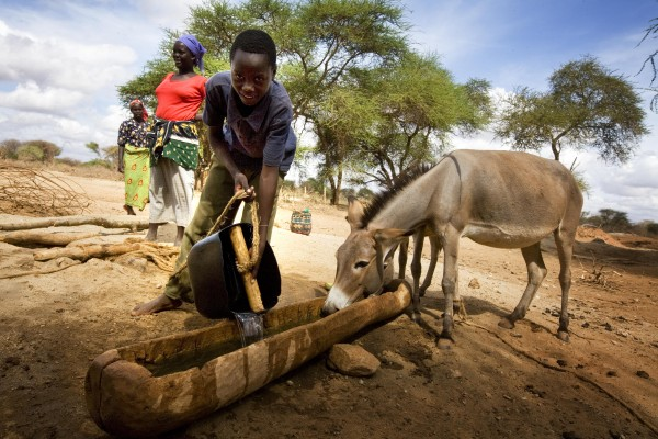 Farmers bring their animals to man made watering holes near Mwingi, Eastern Kenya