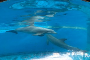 Dolphins in captivity at Orlando SeaWorld