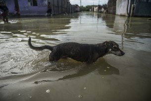 Protecting your pet from floods