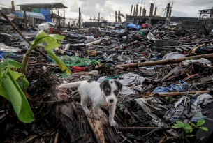 A puppy is seen among debris of houses destroyed by Typhoon Haiyan, in Tacloban city, Philippines - December 2013.