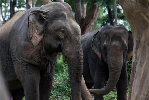Elephant - Animal Welfare - World Animal Protection