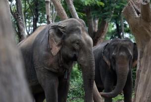 Elephant - Animal Welfare - World Animal Protection