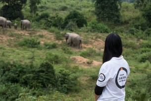 World Animal Protection's Victoria Emmett watches a family of wild elephants in a national park in Thailand