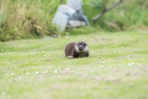 Ranger the rescue otter finds a new home
